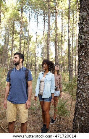 Three friends walking happily in a pine tree plantation in the late afternoon sun while wearing casual clothing