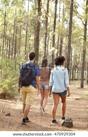Three friends walking in a pine tree plantation in afternoon sunshine while wearing casual clothing