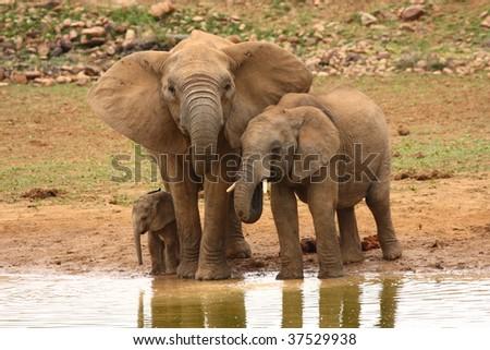 Three generations at the waterhole. - stock photo