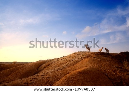 three goats standing in Xinjiang desert,Western China