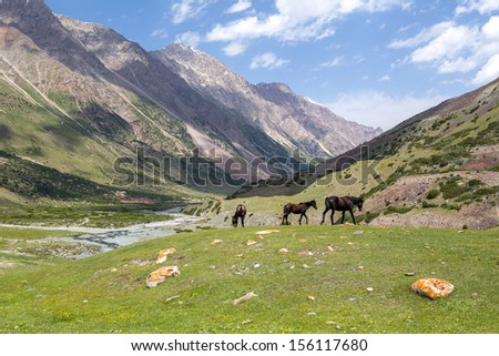 Three grazing brown horses, Tien Shan mountains, Kyrgyzstan - stock photo