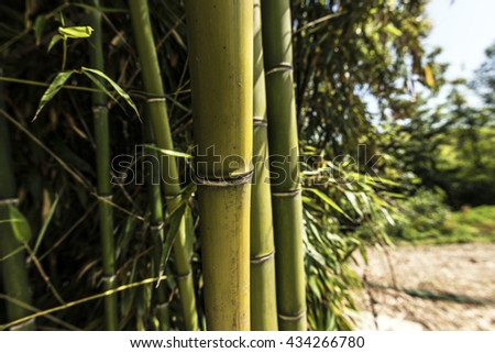 Three green bamboo canes