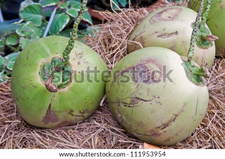 Three green coconut placed on straw. - stock photo