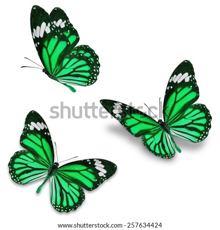 Three green monarch butterfly, isolated on white background  - stock photo