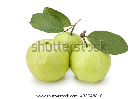 Three guava fruit isolated on the white background - stock photo