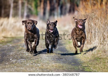 three happy dogs running outdoors
