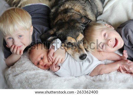 Three happy young children, including a newborn baby girl, a toddler, and their big brother are laying in bed snuggling with their pet German Shepherd Mix dog. - stock photo