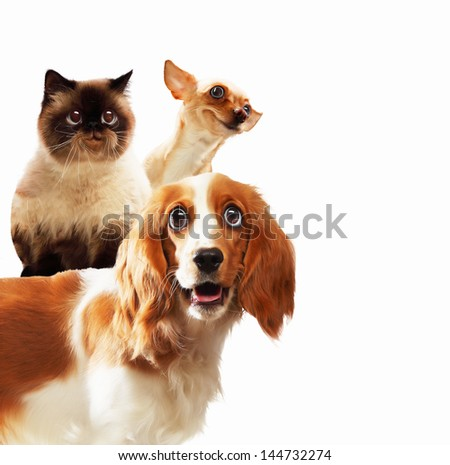 Three home pets next to each other on a light background. funny collage - stock photo