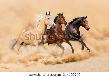 Three horse run in desert sand storm - stock photo