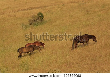 three horse's on a grassy hill side - stock photo