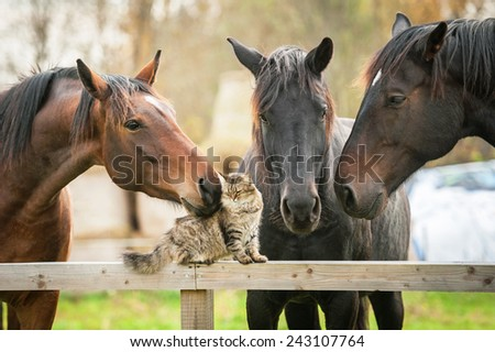 Three horses and cat - stock photo