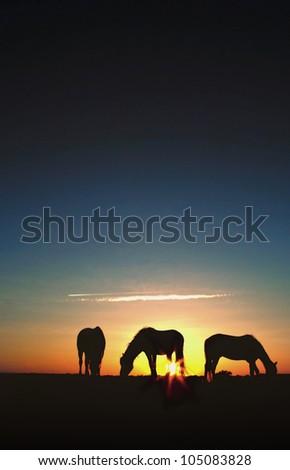 Three horses grazing in a field at sunrise