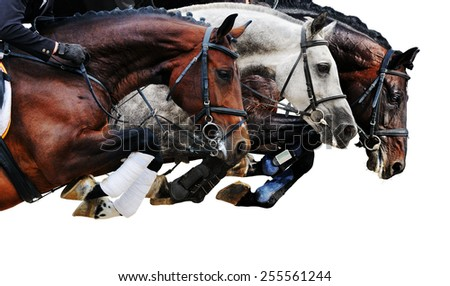 Three horses in jumping show, on white background isolated - stock photo