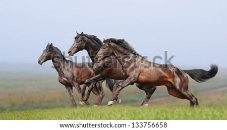 three horses in the foggy field - stock photo