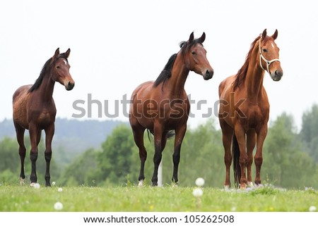 Three horses in the summer meadow looking away - stock photo