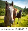 three horses on green mountain pasture, looking at the camera - stock photo