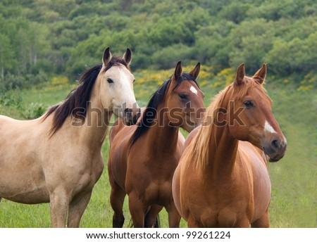 Three Horses Standing in A Row - stock photo