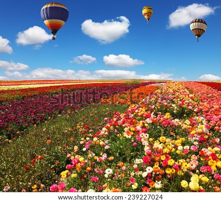 Three huge balloons flying over colorful floral field. Flowers and seeds are grown for export in Israel kibbutz fields - stock photo