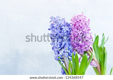 Three hyacinth in the right side of the frame
