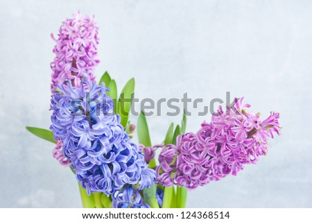 Three hyacinth, two pink and one purple, against the background of light wood - stock photo