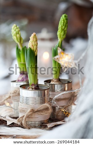 Three hyacinths in used cans - stock photo