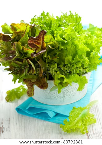 Three kinds green and red lettuce (endive,oak leaf and curly green lettuce) - stock photo