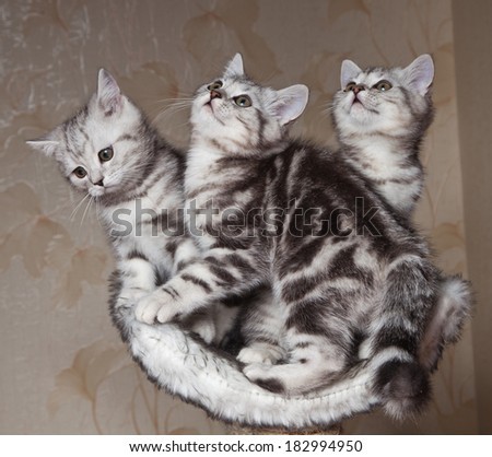 three kittens - stock photo