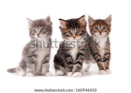 Three kittens isolated on white