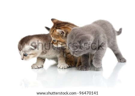 Three kittens. It is isolated on a white background.