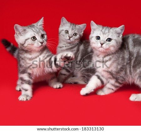 three kittens playing - stock photo