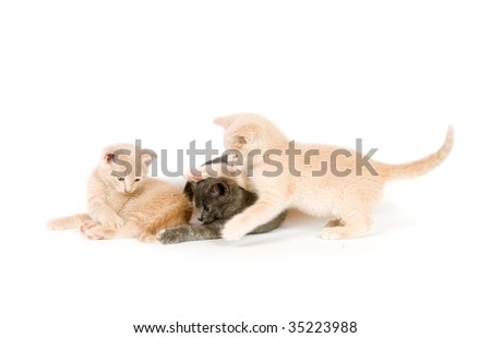 Three kittens playing on white background