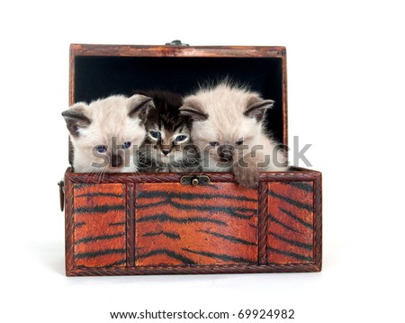 Three kittens sitting inside of a chest on white background - stock photo