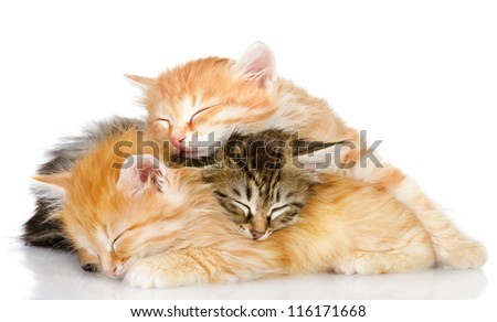 three kittens sleep a heap. isolated on white background - stock photo
