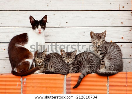 Three kittens sleeping next to his mother - stock photo