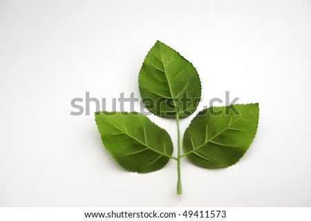Three Leaf Clover (Isolated on White Background) - stock photo