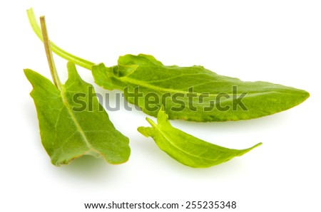 Three leaves of sorrel isolated on white background - stock photo