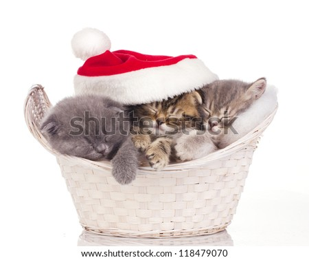 Three  little cats in red cap of santa sleeping in basket isolated on white - stock photo