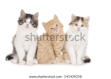 Three little kitten isolated on white