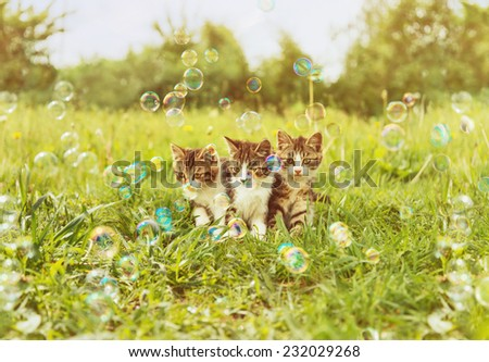 Three little kitten sitting among soap bubbles on summer green meadow. Image with sunlight effect