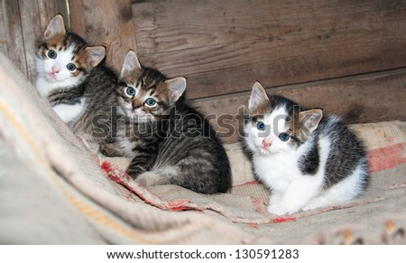 three little kittens sitting on the carpet