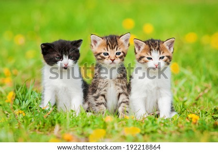 Three little kittens sitting on the field with dandelions - stock photo
