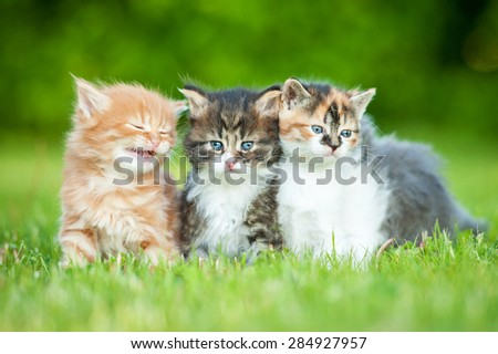 Three little kittens sitting on the lawn in summer