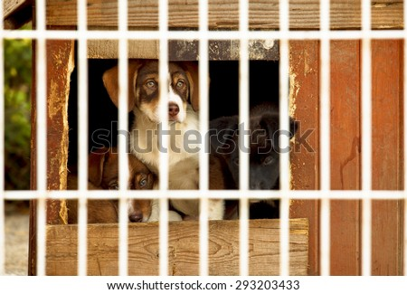 Three little puppies behind bars in a dog shelter. One is sitting, two are lying on the floor of a small doggie house.