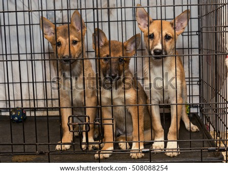 Three little puppy dogs in a cage of a shelter