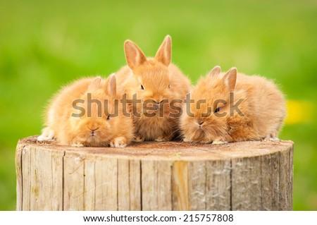 Three little rabbits sitting on the stump  - stock photo