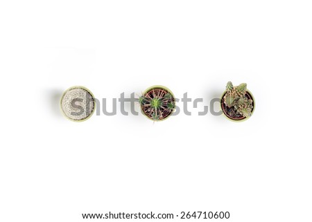 Three mini cactuses on a white background