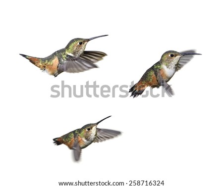 Three moments of hummingbirds isolated on white background - stock photo