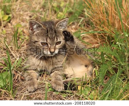 Three months old kitten - stock photo