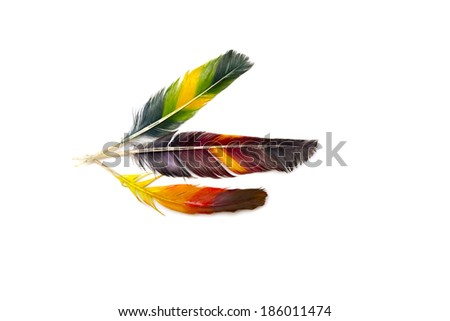 three multi-colored and bright feather - stock photo