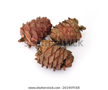 three old cedar cones isolated on white background  - stock photo